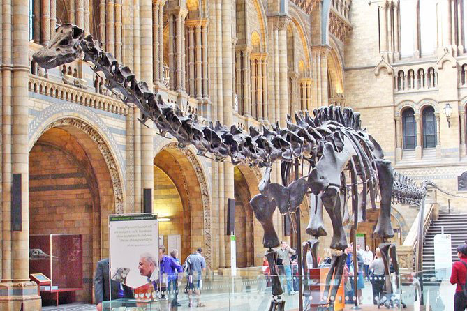 Stay Campus London Top 10 Virtual Tours Natural History Museum Dippy